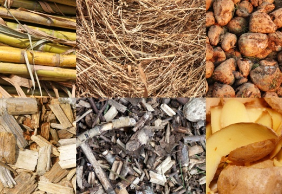 Potential for growth of up to 60% in the coming years, biomass drives energy cogeneration